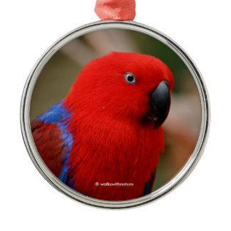 """Beautiful """"Lady in Red"""" Eclectus Parrot Metal Ornament"""