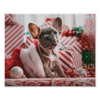 French Bulldog in Christmas Hat Poster